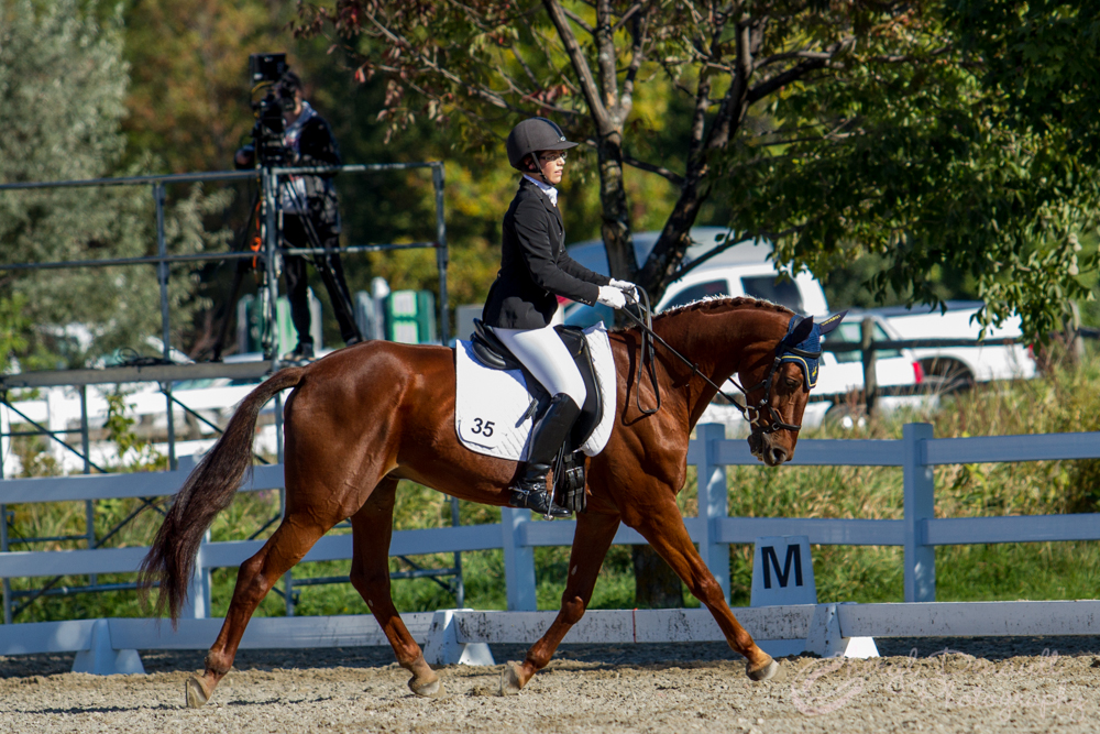 Jenna Mayhew and Kinsale on their way to earning a 68% in their First Level Test 3 on Day 2 of Competition at the CIEC's.