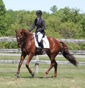 Kristin McLaren & Panamerra warming up for their Second Level dressage debut!  Photo by: Emma Richardson