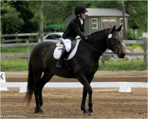 Portia the amazing dressage pony breezing through her Training Level tests at Stevens Creek Silver Dressage Show. Photo by: Emma Richardson