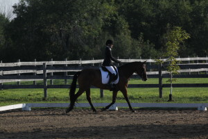Cindy Moore & Gemini in the Silver Dressage Show at Oakhurst, Aug 30, 2015.