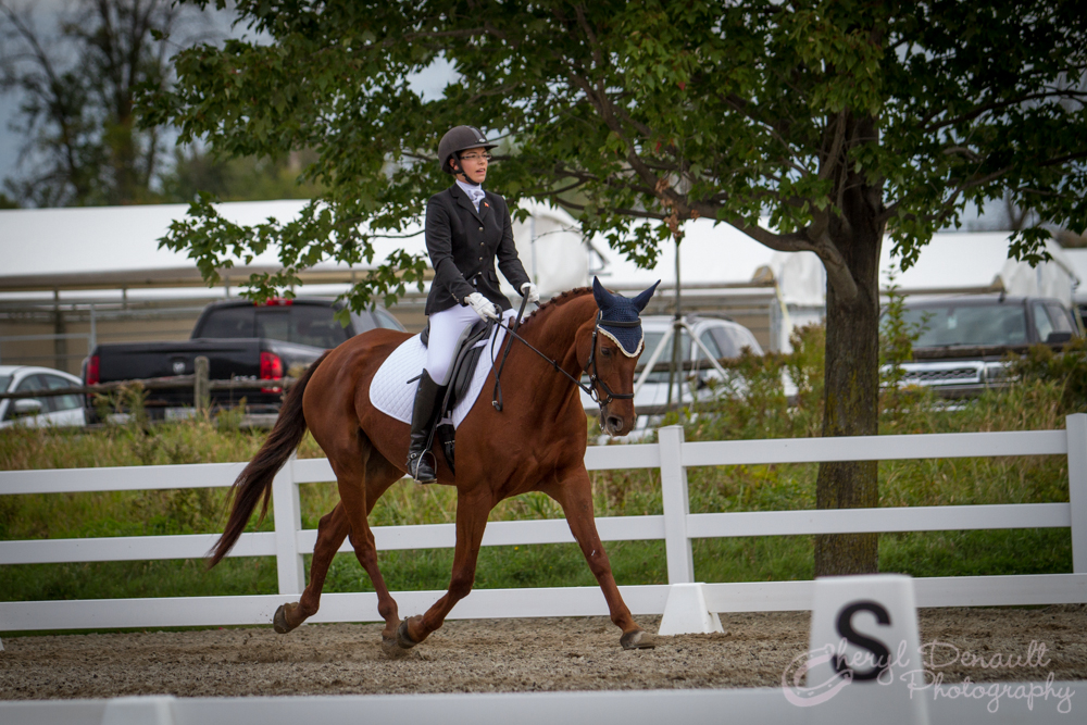 Jenna Mayhew & Kinsale performing their first Dressage Test at CIEC's.  Photo by: Cheryl Denault Photography